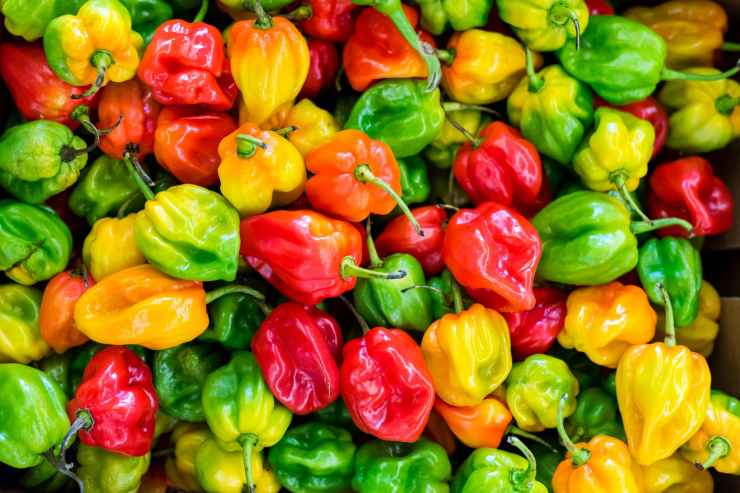 pile of chilies
