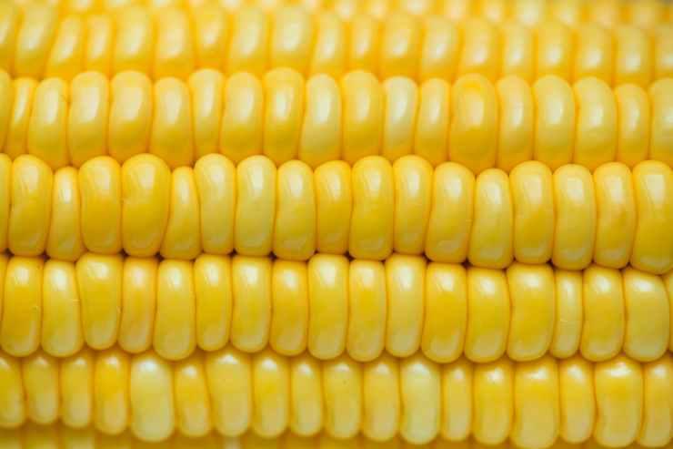 close up photo of corn